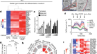 Immune-evasive human islet-like organoids ameliorate diabetes