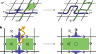 Experimental deterministic correction of qubit loss