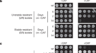 Epigenetic gene silencing by heterochromatin primes fungal resistance