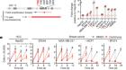 TRIM37 controls cancer-specific vulnerability to PLK4 inhibition