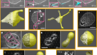 Active particles induce large shape deformations in giant lipid vesicles