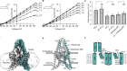 Structural basis for pH gating of the two-pore domain K+ channel TASK2