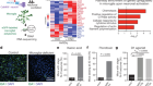Negative feedback control of neuronal activity by microglia