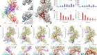 Mechanism of strand exchange from RecA–DNA synaptic and D-loop structures