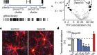 Cas9 gene therapy for Angelman syndrome traps Ube3a-ATS long non-coding RNA