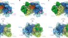 Host ANP32A mediates the assembly of the influenza virus replicase