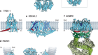 Discoveries in structure and physiology of mechanically activated ion channels