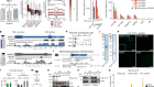 RNA nucleation by MSL2 induces selective X chromosome compartmentalization