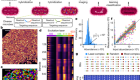 Highly multiplexed spatial mapping of microbial communities