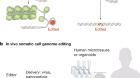 The NIH Somatic Cell Genome Editing program