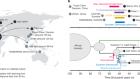 Origins of modern human ancestry