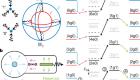 Protecting a bosonic qubit with autonomous quantum error correction