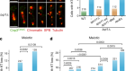 Centromeres are dismantled by foundational meiotic proteins Spo11 and Rec8