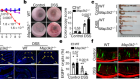 MAP3K2-regulated intestinal stromal cells define a distinct stem cell niche