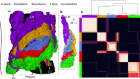 A multi-scale brain map derived from whole-brain volumetric reconstructions