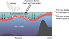 Summertime increases in upper-ocean stratification and mixed-layer depth