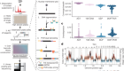 Breast tumours maintain a reservoir of subclonal diversity during expansion