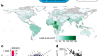 Developmental and biophysical determinants of grass leaf size worldwide