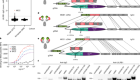 Structural basis of malaria RIFIN binding by LILRB1-containing antibodies