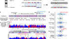The structure, function and evolution of a complete human chromosome 8