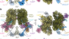Structural basis of long-range to short-range synaptic transition in NHEJ