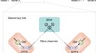 Heralded entanglement distribution between two absorptive quantum memories