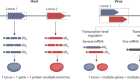 Unconventional viral gene expression mechanisms as therapeutic targets