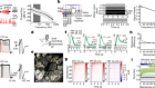 Fast odour dynamics are encoded in the olfactory system and guide behaviour