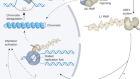 The role of retrotransposable elements in ageing and age-associated diseases