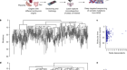 Lineage tracing of human development through somatic mutations