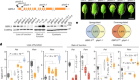 A phase-separated nuclear GBPL circuit controls immunity in plants
