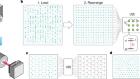 Quantum phases of matter on a 256-atom programmable quantum simulator