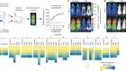 An invariant Trypanosoma vivax vaccine antigen induces protective immunity
