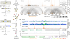 Spo11 generates gaps through concerted cuts at sites of topological stress