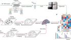 Exploring tissue architecture using spatial transcriptomics
