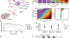 Clonal fitness inferred from time-series modelling of single-cell cancer genomes