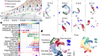 Molecular logic of cellular diversification in the mouse cerebral cortex