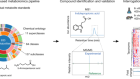 A metabolomics pipeline for the mechanistic interrogation of the gut microbiome