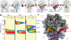 Structural basis of early translocation events on the ribosome