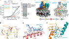 Mechanisms of BRCA1–BARD1 nucleosome recognition and ubiquitylation