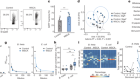 Acetate differentially regulates IgA reactivity to commensal bacteria