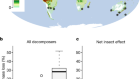 The contribution of insects to global forest deadwood decomposition
