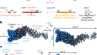 Structural basis of human separase regulation by securin and CDK1–cyclin B1