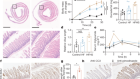 Dietary fructose improves intestinal cell survival and nutrient absorption