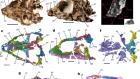 A Triassic stem lepidosaur illuminates the origin of lizard-like reptiles