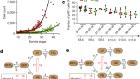 Quantitative lineage analysis identifies a hepato-pancreato-biliary progenitor niche