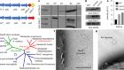 Structure of Geobacter pili reveals secretory rather than nanowire behaviour