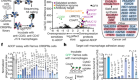Inter-cellular CRISPR screens reveal regulators of cancer cell phagocytosis