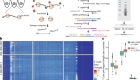 Single-cell Ribo-seq reveals cell cycle-dependent translational pausing