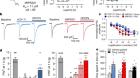 Positive allosteric mechanisms of adenosine A1 receptor-mediated analgesia